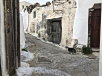 alleyways = cats. especially in Greece.